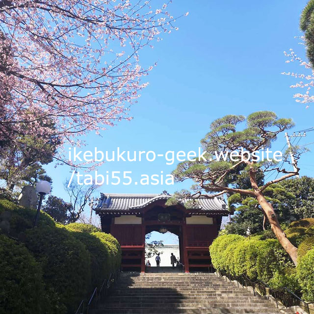 sakura@ Gokokuji-Temple