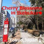 Cherry Blossoms(Sakura)12 Spots in Ikebukuro(Tokyo,Japan)