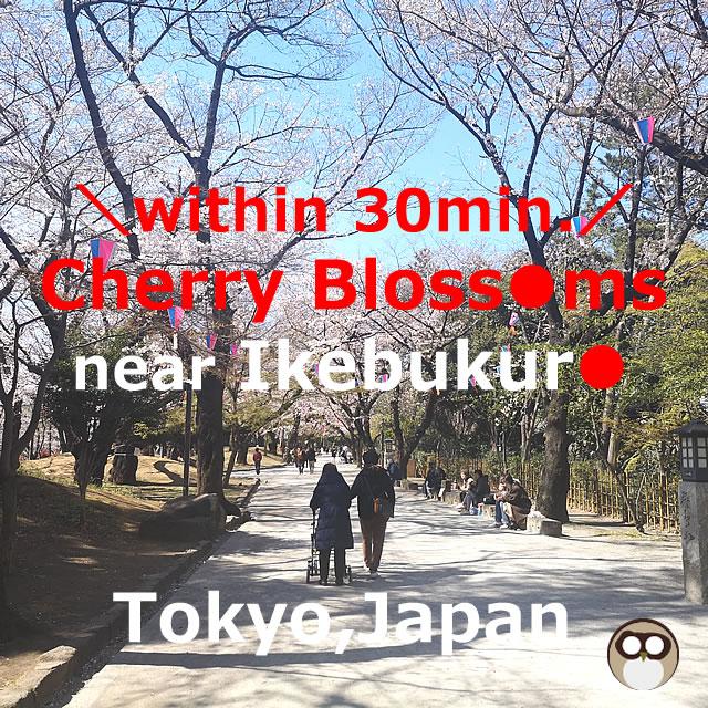 Cherry Blossoms(Sakura)【12Spots】 near Ikebukuro(Tokyo,Japan)