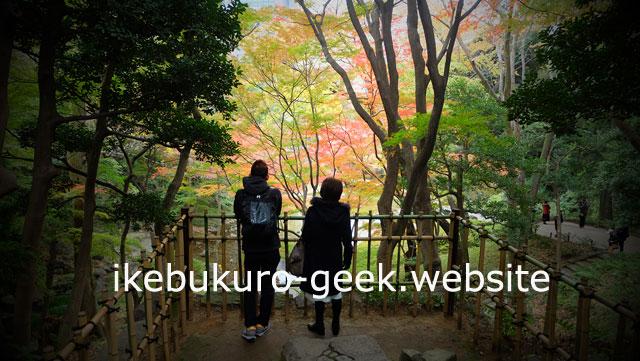 Autumn leaves in Autumn(late November)