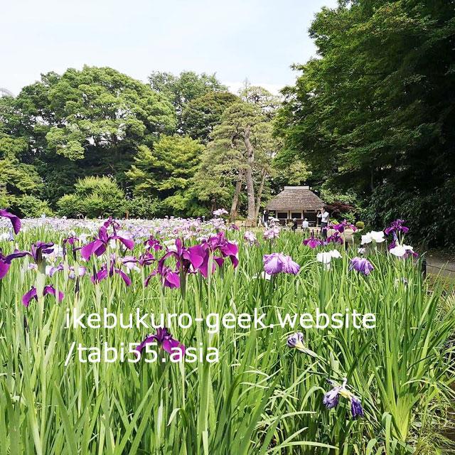 Iris in Summer(early June)Koishikawa Korakuen Garden