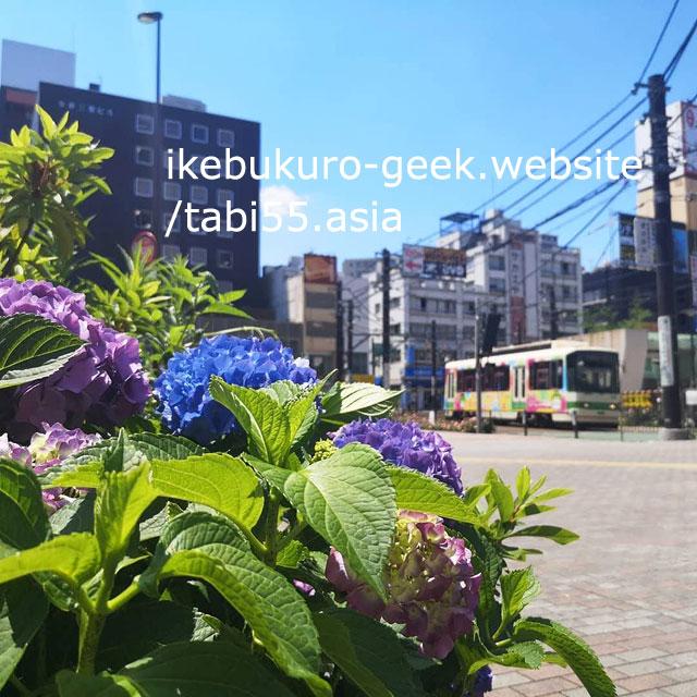 Hydrangeas with SakuraTram at Otsuka Station