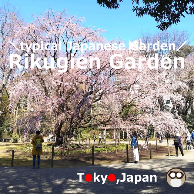 Rikugien Garden!light up in Sakura,Autumn season (Tokyo,Japan)