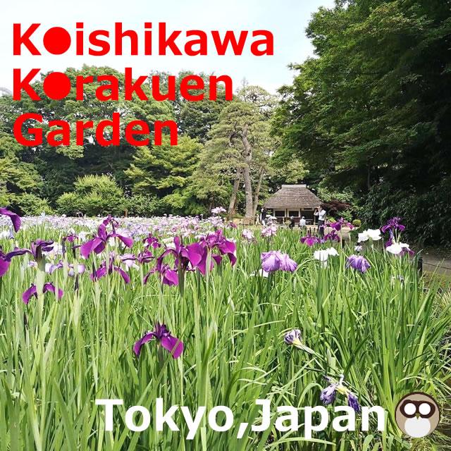 Koishikawa Korakuen Garden(Tokyo,Japan)