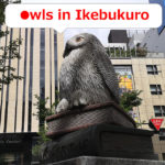 Owls in Ikebukuro