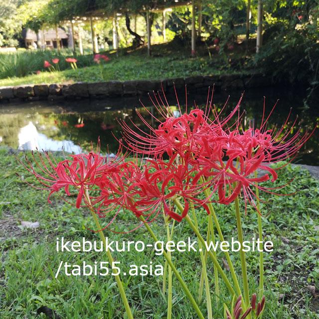 Red Spider Lily@Koishikawa Korakuen