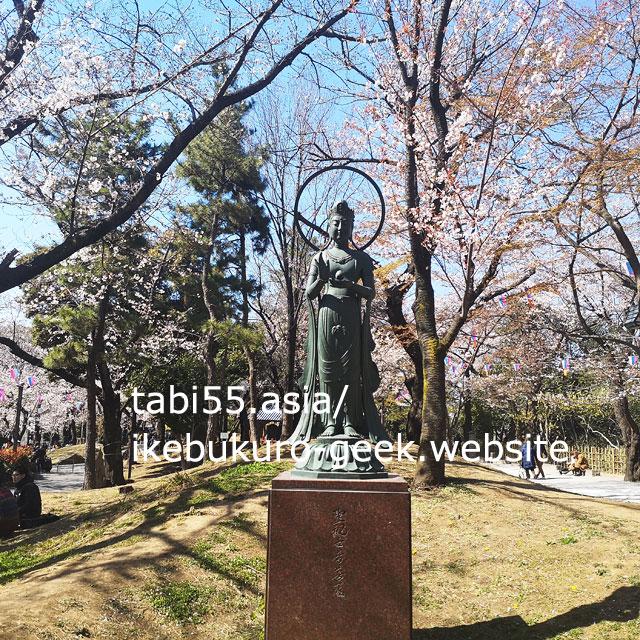 asukayama park cherry blossom