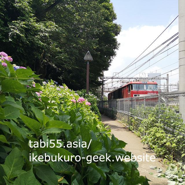 asukayama park hydrangea