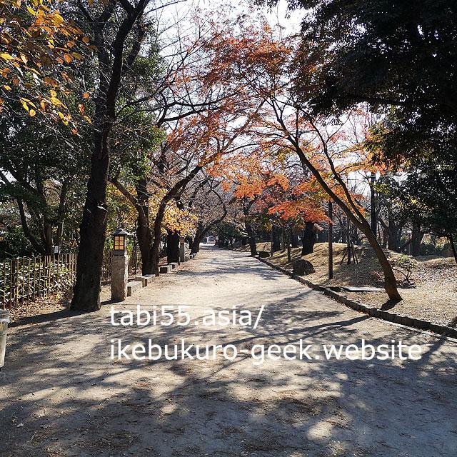 asukayama park autumn leaves