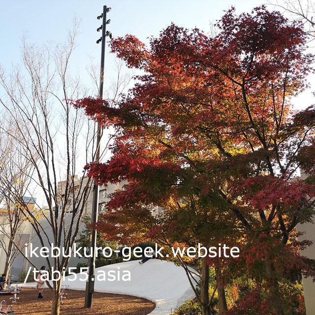 Autumn leaves in Winter(Early December)@Minami Ikebukuro Park,Tokyo