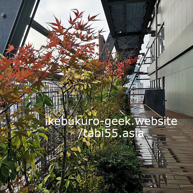 Toshima no Mori(Forest)+Green Trace(Toshima City Office)/Autumn leaves in Ikebukuro