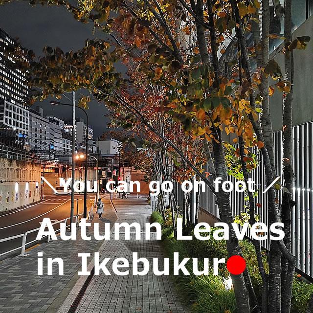 Autumn leaves【10】 in Ikebukuro,Tokyo , Japan
