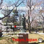 Asukayama Park!Cherry Blossom×Hydrangea,Tokyo
